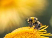 My child was stung by a bee or yellow jacket: WHAT SHOULD I DO?